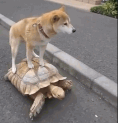 Dog Riding a Turtle